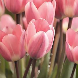 Jennie Marie Schell - Lovely Pink Tulips in the Spring Garden