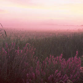 Lustrife Sunrise Great Meadows Concord MA by Bucko Productions Photography