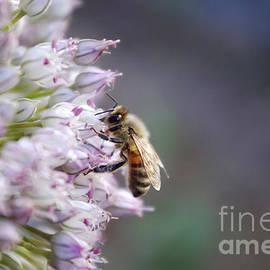 James Kinvig - Macro Bee