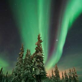Priska Wettstein - Magic winter night