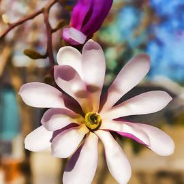 Georgia Mizuleva - Magnolia Blossom - Impressions Of Spring