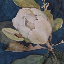 Nancy Kane Chapman - Magnolia Evening
