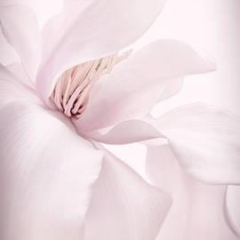 Jennie Marie Schell - Magnolia Flower Blossom Soft Pink
