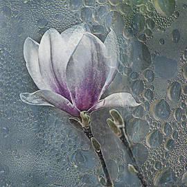 Joachim G Pinkawa - Magnolia