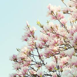 Magnolias by Sylvia Cook