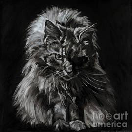 Main Coon Cat Portrait by Christine Montague