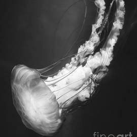 Michael Ver Sprill - Majestic Jellyfish BW