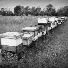 Making Honey II bw by Beth Vincent