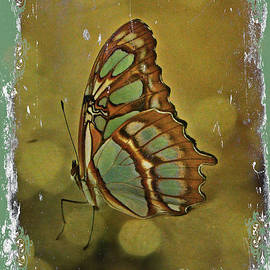 Mother Nature - Malachite - Flying Jewel