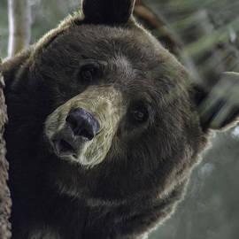 Mitch Shindelbower - Mama Bear