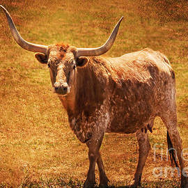 Mancos Colorado Longhorn Cattle by Janice Pariza