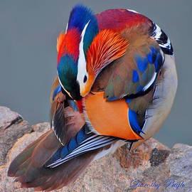 Dorothy  Pugh - Mandarin Duck Preening