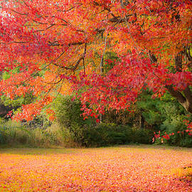 Jeff Folger - Maple In Red And Orange