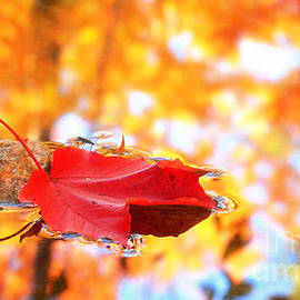Charline Xia - Maple Leaf and Fall Color