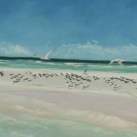Steve Haigh - Marco Island Sandbar