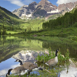 Rob Greebon - Maroon Bells Images - Canada Geese on a Summer Morning in Colora
