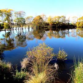 Marshlands Water Ways by Joyce Woodhouse