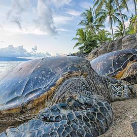 Hawaii  Fine Art Photography - Maui Daydreams