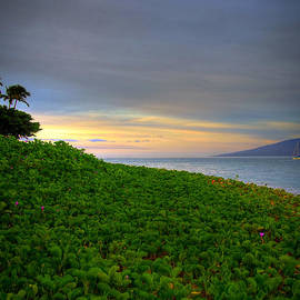 Maui Morning by Kelly Wade