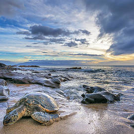 Hawaii  Fine Art Photography - Maui Sea Turtle