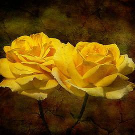 Blair Wainman - Mellow Yellow
