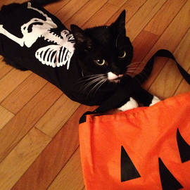 Meow Cat in Skeleton Costume by Juhli Jansen