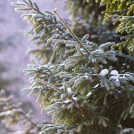 Alexander Senin - Merry Christmas 5