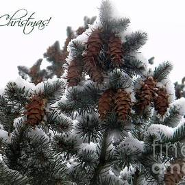 Merry Christmas Pinecones by Michelle Frizzell-Thompson