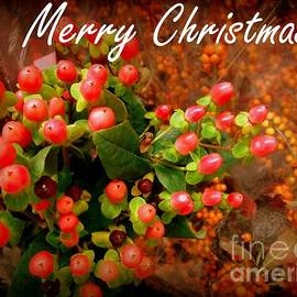 Merry Christmas - Red Berries Holiday and Christmas Card by Miriam Danar