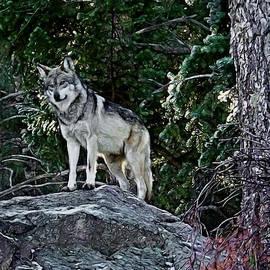 Ernie Echols - Mexican Grey Wolf Digital Art