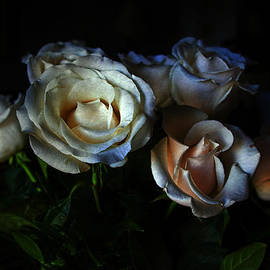 Joan Bertucci - Midnight Roses
