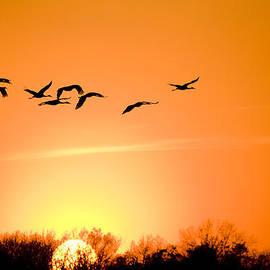 Migration by Alexey Stiop