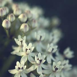 Saija  Lehtonen - Milkweed