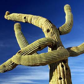 Mission Saguaro by Douglas Taylor