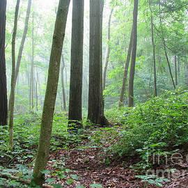 Kathi Mirto - Misty Deep Forest