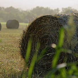 Misty Morning Bales Of Hay by Sarah Broadmeadow-Thomas