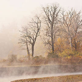 Misty Morning by Marcia Colelli