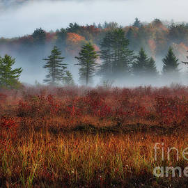 Dan Carmichael - Misty Morning Meadow I - Cranberry Wilderness