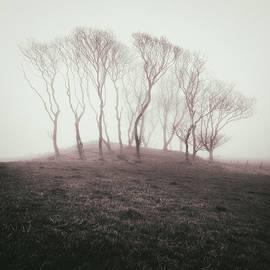 Dave Bowman - Misty Trees