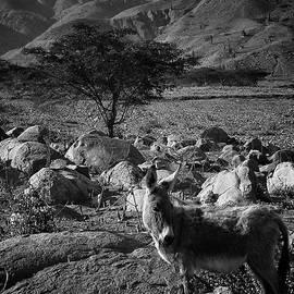 Moche Valley Donkey by Ben Shields