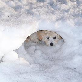 Sheila Byers - Molly Hidding in Her Snow Cave