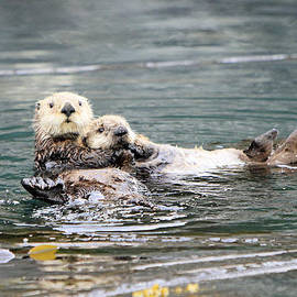 Shoal Hollingsworth - Mom and Pup