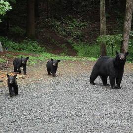 Jan Dappen - momma and three bears