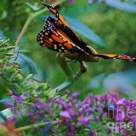 Monarch Butterfly Down by Joy Bradley