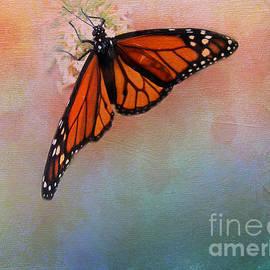 Monarch by Judi Bagwell