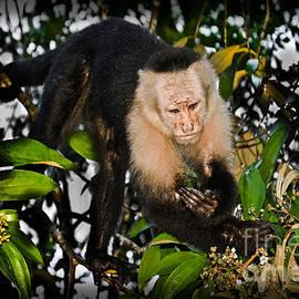Gary Keesler - Monkey Business