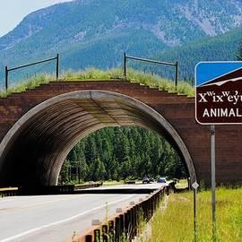 Kae Cheatham - Montana Highway - #2 Animal