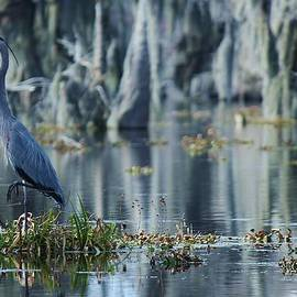 Blue Cypress Photography - Moody Blue