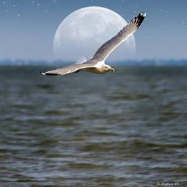 Brian Wallace - Moon Flight