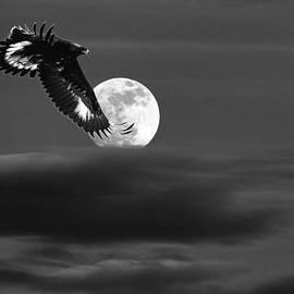 Jim Garrison - Moonlight Flight